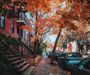 autumn, cars, and building image