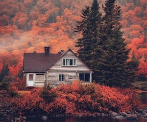autumn, forest, and cabin image