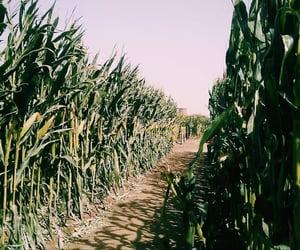 autumn, corn maze, and fall image