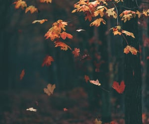 article, words, and autumn image