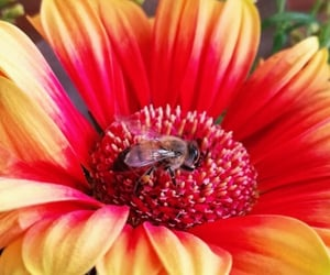 animals, bees, and flowers image