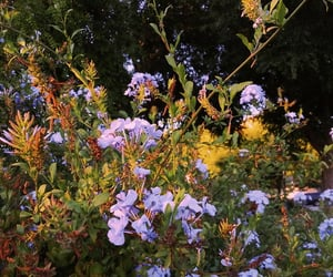 flowers, outdoors, and sunshine image