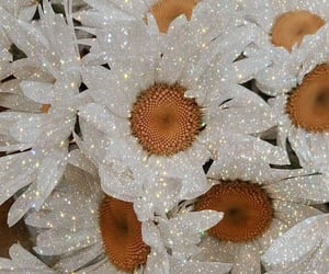 aesthetic, daisy, and flowers image