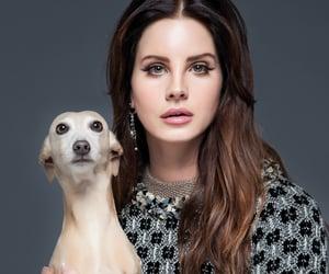 lana del rey, dog, and lana image