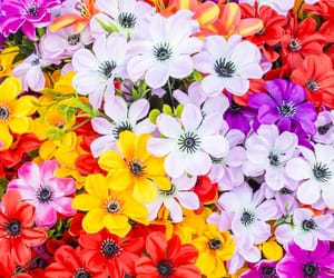 colores, flores, and natural image
