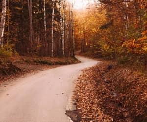 autumn, autumnal, and daylight image