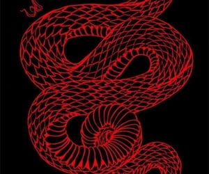 red, aesthetic, and snake image