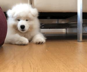 animal, gif, and dog image