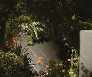 aesthetic, ibiza, and palms image