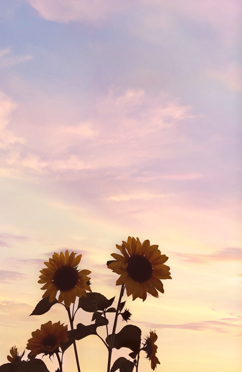 Sunflower Sunsets Shared By Sweetcinnamon On We Heart It