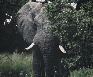 adventure, animals, and elephant image