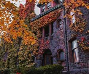 cozy, autumn, and beautiful image