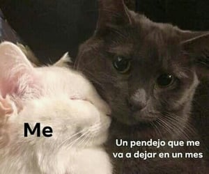 frases, me, and meme image
