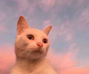 cat, aesthetic, and sky image