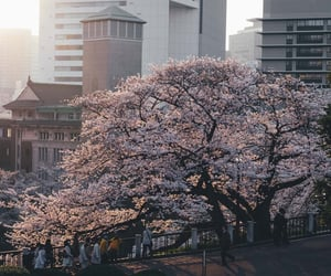japan, beautiful, and cherry blossom image