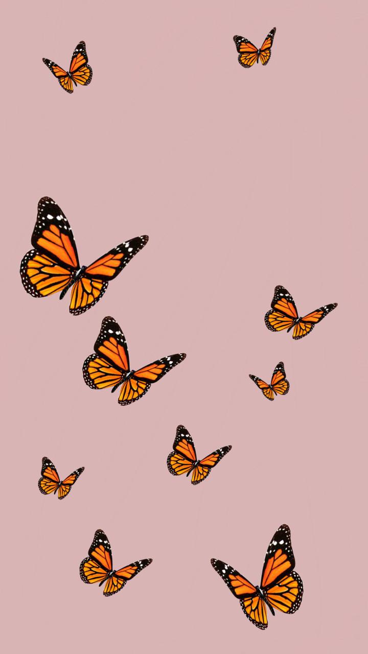 Aesthetic Vsco Iphone Wallpaper Butterfly - All Phone ...