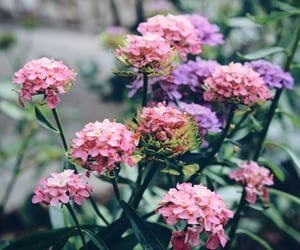 beautiful, nature, and flower image