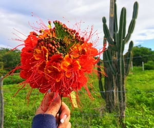 autoral, day, and flowers image