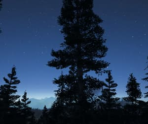 blue, dusk, and forest image
