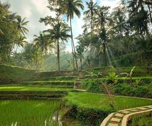 bali, holidays, and nature image