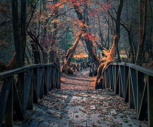 autumn, trees, and bridge image