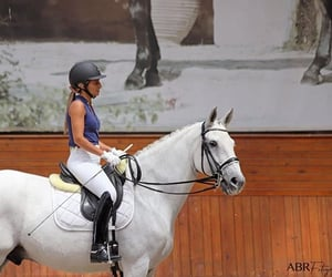 equestrian, equine, and ride image