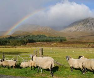 life, nature, and rainbow image
