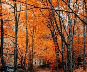 fall, autumn, and orange image