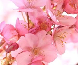 flower, ًورود, and أزهار image