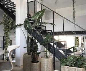 home and plants image