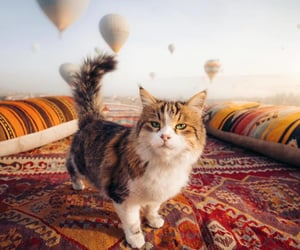 cappadocia, turkiye, and goreme image