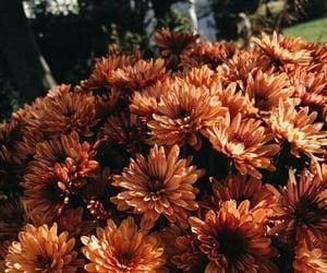 flowers, orange, and fall image
