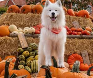pumpkin and puppy image