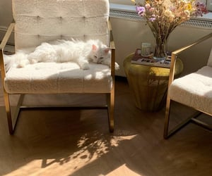 cat cats, cozy, and home image