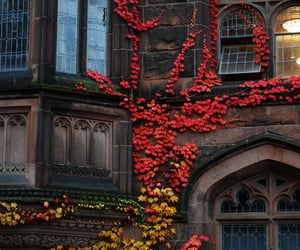 autumn, leaves, and house image