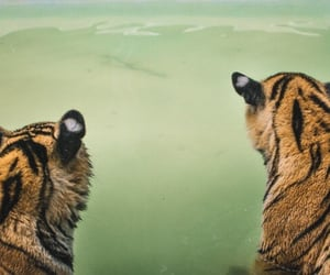 animals, green, and tigers image
