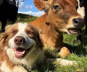 animal, cow, and dog image