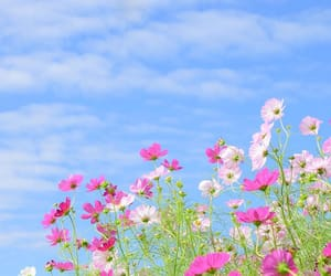 autumn, flower, and nature image