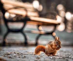 squirrel, autumn, and lights image