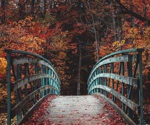 autumn, belleza, and naturaleza image