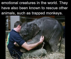 elephant, fuck the circus, and sacred creatures image