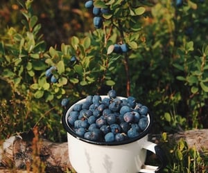 fruit, beauty, and blueberries image