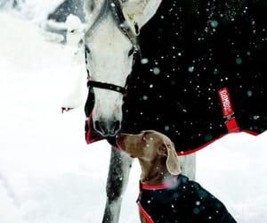 dog, horse, and winter image