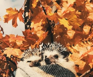 autumn, hedgehog, and animals image