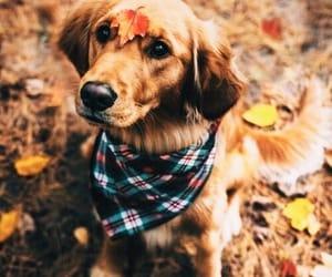 animal, dog, and autumn image