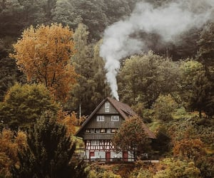 forest, house, and autumn image