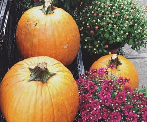 autumn, flowers, and pumpkin image