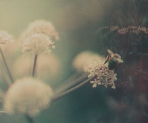 beach, dreamy, and flowers image