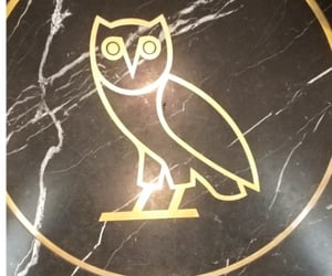 Drake, october, and owls image