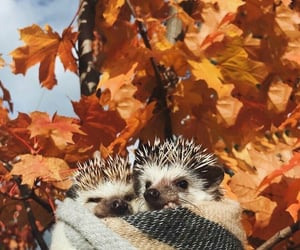 autumn, hedgehog, and animals image